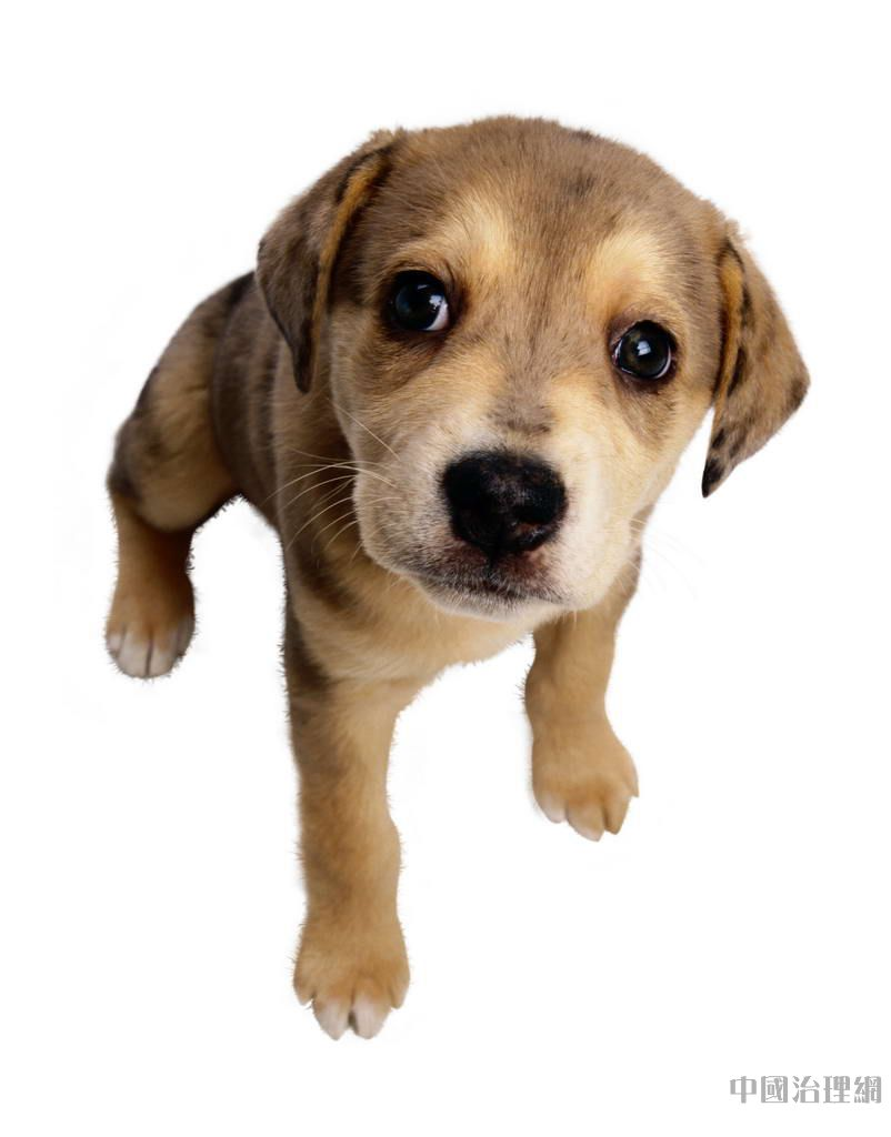 狗和人�y�'��)�al�����:)�h�_新闻时讯 > 正文      常说狗狗是人类忠实的朋友,不过平时在跟这些
